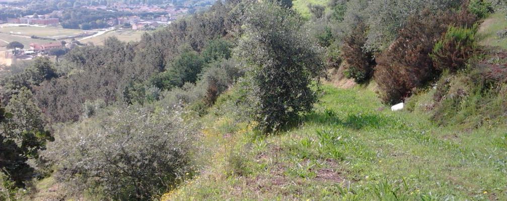 ara648